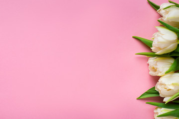 Keuken foto achterwand Tulp Top view of white tulips on pink background with copy space