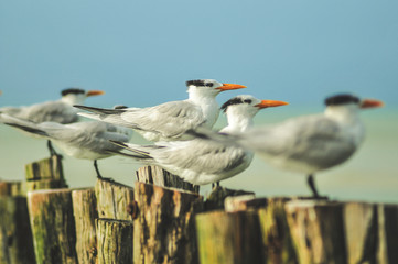 Side view of amazing seagulls with orange beaks sitting on tree stumps and looking away