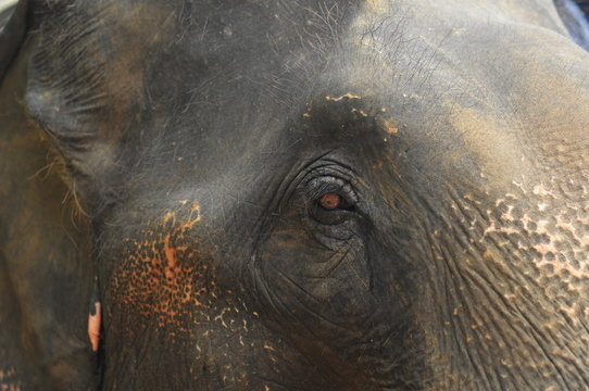 Crop large gray face of wise elephant looking attentively with small brown eyes in light day