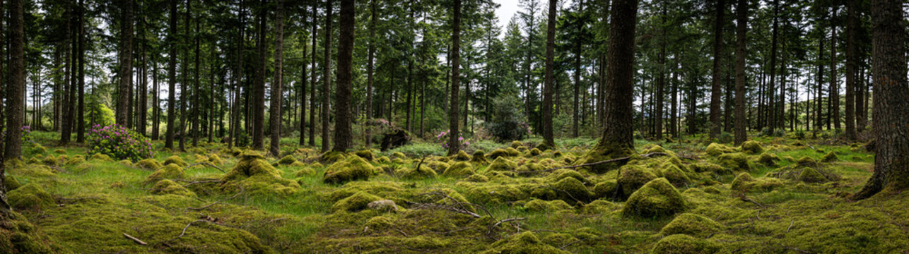 Panorama of green mystic forest of ireland