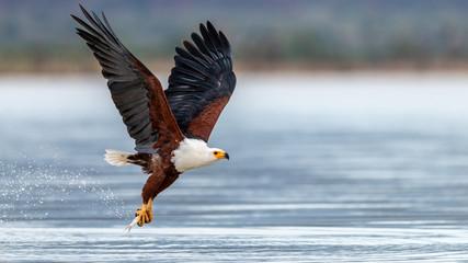 Oiseaux - Masaï Mara Kenya Fototapete