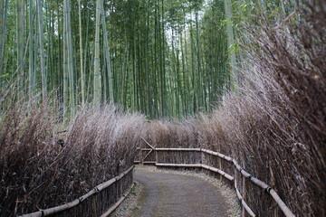 Bambuswald Bambus