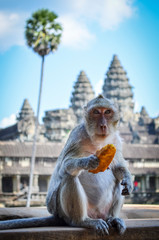 Ankor Wat, a 12th century historic Khmer temple and UNESCO world heritage site. Monkey sititng on a balustrade eating fruit. ,Angkor Wat