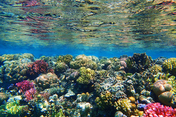 Poster Coral reefs coral reef in Red Sea