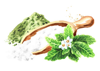 Stevia rebaudiana plant, Natural sweetener, and  dry shredded stevia with powder. Hand drawn watercolor illustration,  isolated on white background