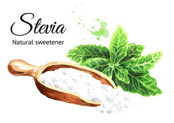 Stevia rebaudiana plant, Natural sweetener, and scoop with powder. Hand drawn watercolor illustration  isolated on white background