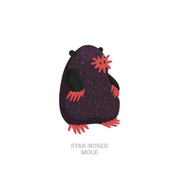 Rare animals collection. Star-nosed mole, Condylura cristata. North American mole with sensitive star-like nose. Flat style vector illustration isolated on white background.