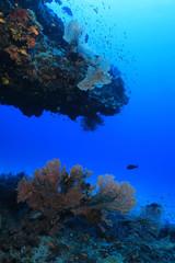 Wall Mural - Beautiful coral reef