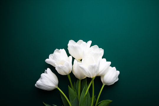 White tulips on green background top view. Happy spring Holidays. Valentine's day. Birthday. Women's day. Easter. Flower wedding card, invitation, banner