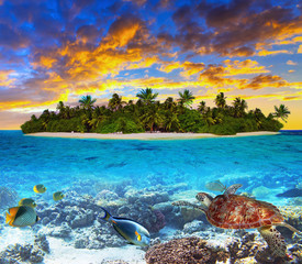 Obraz Tropical island of Maldives on the Indian Ocean at sunset with marine life - fototapety do salonu