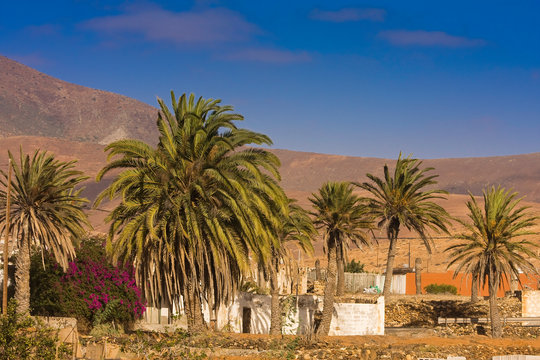 Small Finca in a Mountain landscape with a palm grove near Tuineje, Fuerteventura, Canary Islands, Spain, Europe