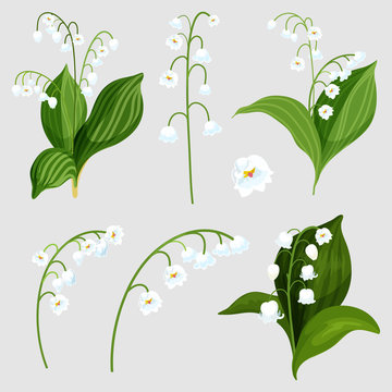 Isolated set lily of the valley bouquet elements