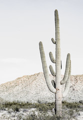Southwest Desert Cacti Modern Home Decor