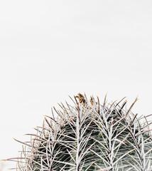 Southwest Desert Cacti Modern Home Decor
