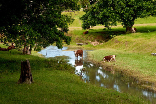 Pastoral scene in the Inland countryside of Coffs Harbour region, NSW, Australia