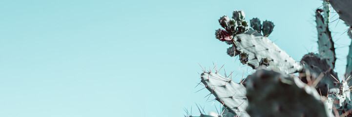 In de dag Cactus Succulent cactus plant natural background