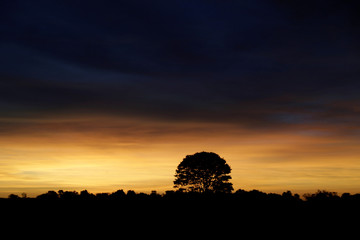 Tree is silhouetted shortly after sunset at a soy farm in Caaguazu