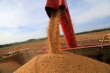 Soybeans are loaded on a truck after being harvested at a farm in Caaguazu
