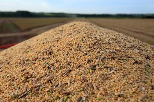 Soybeans are pictured on a truck after being harvested at a farm in Caaguazu