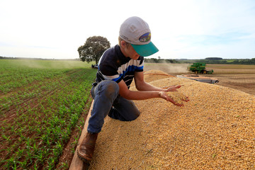 Farmer checks soybeans after being harvested at a farm in Caaguazu
