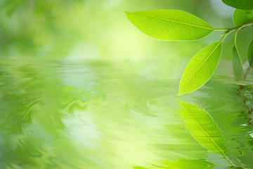 Green leaf reflects in water ripple. Beautiful leaf texture under sunlight. Nature background with copy space for text. Wall mural