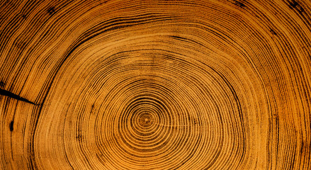 Spoed Fotobehang Bamboo Old wooden spiral tree cut surface. Detailed warm dark brown and orange tones of a felled tree trunk or stump. Rough organic texture of tree rings with close up of end grain.