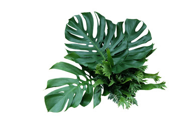 Wall Mural - Tropical green leaves forest plant Monstera, fern, and climbing bird's nest fern foliage plants floral bunch for wedding and ceremony decoration isolated on white background with clipping path.