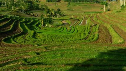 Zelfklevend Fotobehang Rijstvelden Beautiful view of Mareje Lombok's traditional fields. A nature walk in green paddy terrace. Summer vacation in Lombok, Indonesia. New Rice Fields.