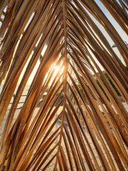 Closeup abstract image of sunset sun shining through dry palm tree leaves