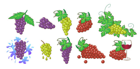 grape vector set collection graphic clipart design
