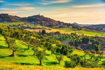 Casale Marittimo village and olive trees in Maremma. Tuscany, Italy.