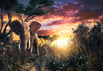 African Elephant in the Savanna at Sunset