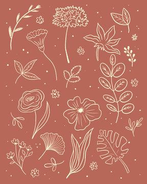 Botanical floral illustration line drawing set. Boho Flowers and leaves collection