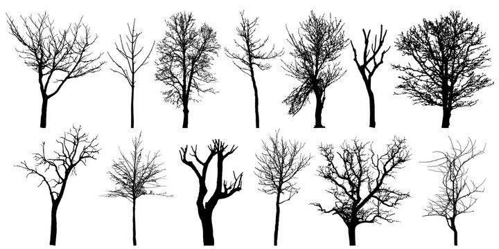 Set of autumn bare trees, silhouettes. Vector illustration.