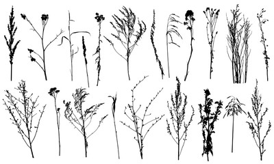 Collection of wild plants and weeds, silhouettes. Vector illustration. Fotomurales