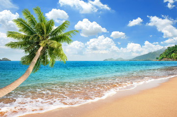 Wall Mural - Beautiful Sandy Beach with Coconut palm tree sticking into the sea and bright blue sky with cloudscape
