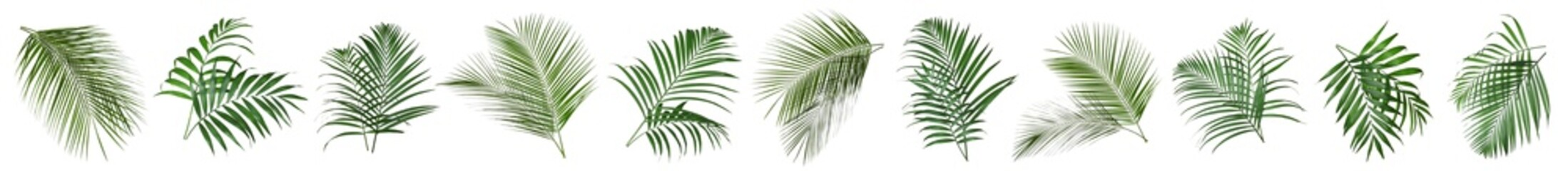 Acrylic Prints Palm tree Set of tropical leaves on white background. Banner design