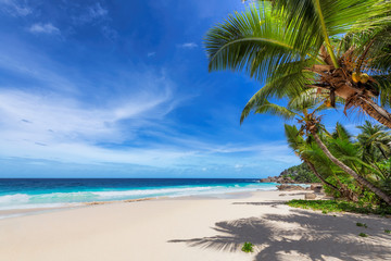 Tropical Beach. Sunny beach with coco palms and turquoise sea. Summer vacation and tropical beach concept.