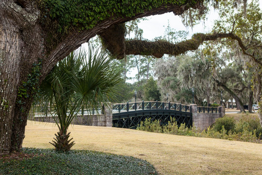 View of live oak trees and bridge in Palmetto Bluff near Bluffton, South Carolina, USA.