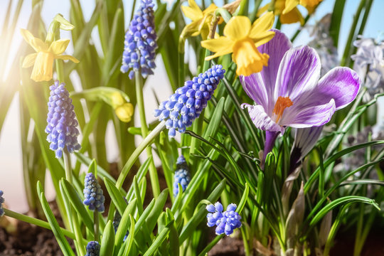 garden of of blooming various flowers in springtime