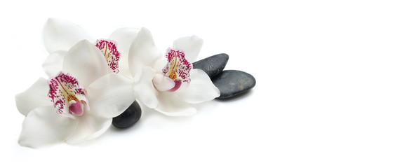 Foto op Plexiglas Orchidee beautiful white orchids isolated on white background with black pebbles