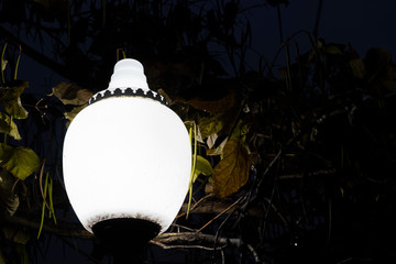 Fotomurales - Street light in night park night. Old street lamp. Dramatic dark light.