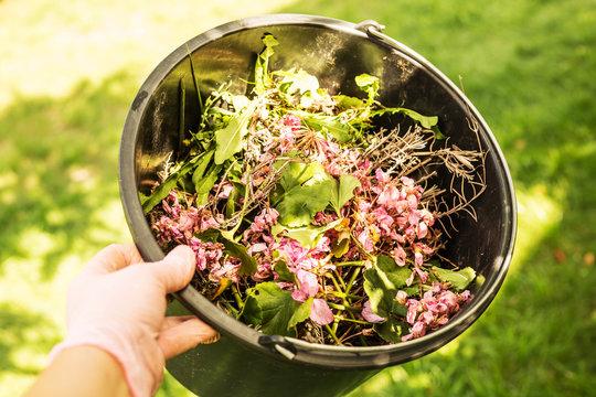 Gardening - organic waste (bio waste) - compost ingredients