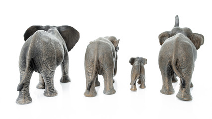 Papiers peints Elephant Elephant family. Backside of the elephant isolated on white background.