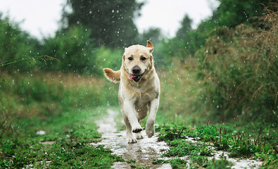 Spoed Fotobehang Hond Funny dog playing under raindrops in countryside
