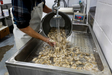 Peanut Shiver of Barber's Seafood in Eastpoint, Florida, U.S., washes oysters from Texas after they were removed from their shells