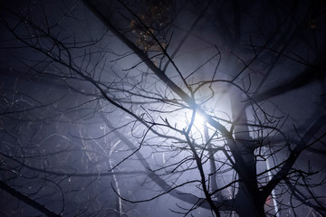 Fotomurales - Lamp post shining through tree's branches in fog. Street light's beam in foggy night. Dense fog.