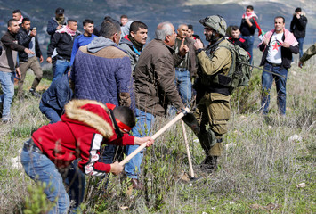 Palestinian demonstrator argues with an Israeli soldier as other plants olive trees during a protest in the Israeli-occupied West Bank