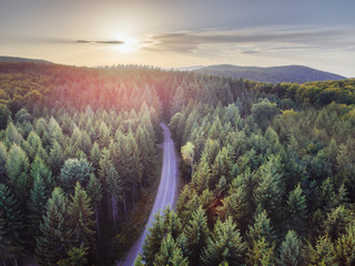 Aerial nature scenic landscape of pine trees and driving road in summer. Top view of dark green...
