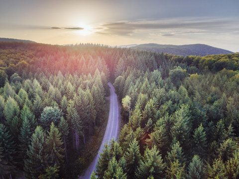Aerial nature scenic landscape of pine trees and driving road in summer. Top view of dark green forest in mountain at sunset.